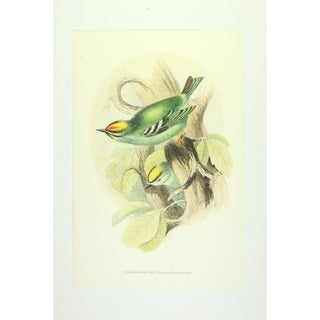 Birds Wall Art Print