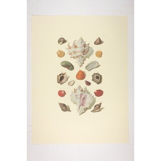 Fuentabella Shell premium Art Print of Sailboat Art