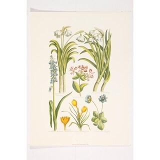 Botanical premium Art Print of Flowers by John Hill