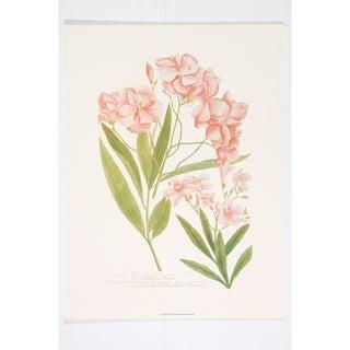 Oleanders II Wall Art Print by Johann Weinmann