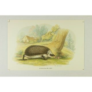 The Hedgehog Wall Art Print