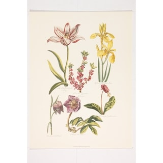 Botanical Fine Art Print by John Hill
