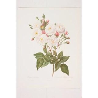 Rosa Noisettaiana Fine Art Print by P J Redoute