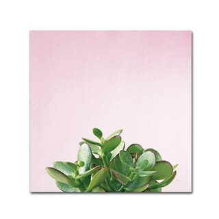 Felicity Bradley 'Succulent Simplicity III on Pink' Canvas Art