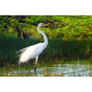 """Egret"" by Isuru Wak, Giclee Canvas Wall Art"