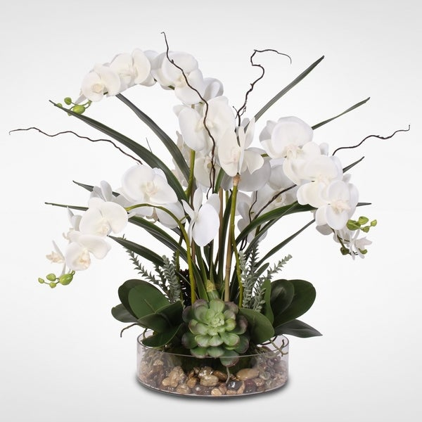 Real Touch White Phalaenopsis Orchid & Succulents in a Glass Pot. Opens flyout.