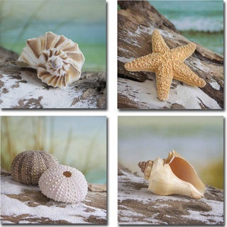 Shell and Driftwood I, II, III, and IV by Donna Geissler 4-piece Gallery-Wrapped Canvas Giclee Art Set
