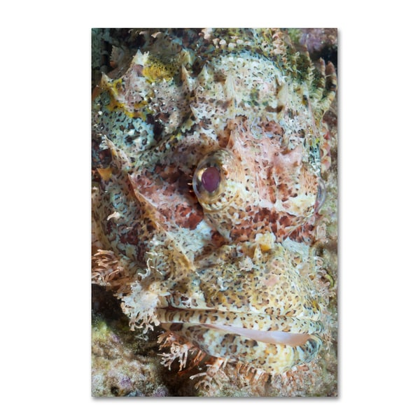 Robert Harding Picture Library 'Underwater' Canvas Art