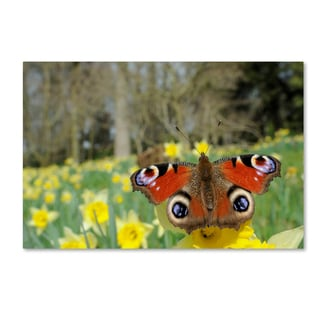 Robert Harding Picture Library 'Red Butterfly' Canvas Art