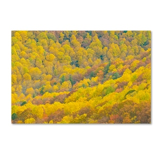 Robert Harding Picture Library 'Forest' Canvas Art