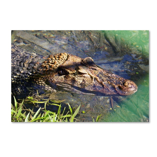 Robert Harding Picture Library 'Alligators' Canvas Art