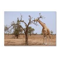 Robert Harding Picture Library 'Giraffes' Canvas Art