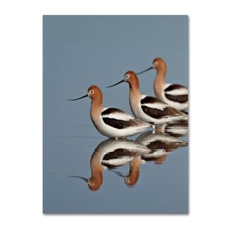 Robert Harding Picture Library 'Three Birds' Canvas Art