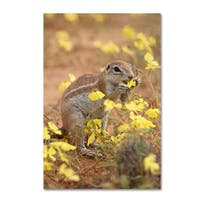 Robert Harding Picture Library 'Squirrels' Canvas Art