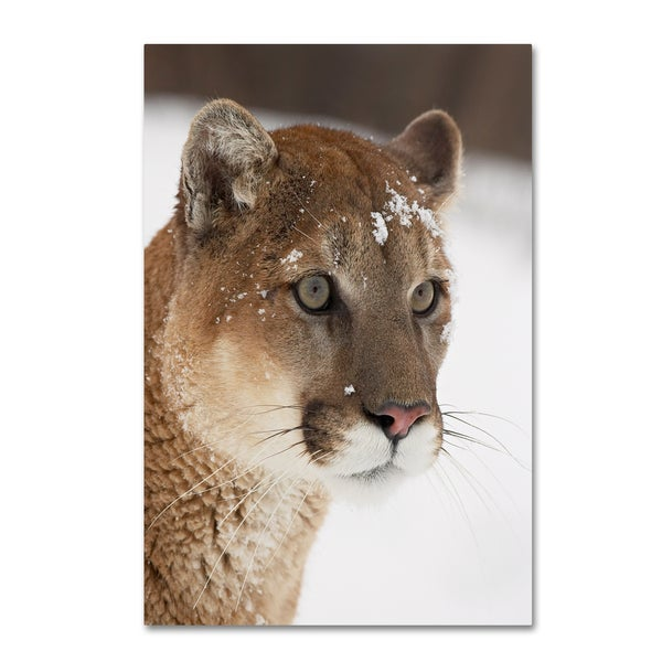 Robert Harding Picture Library 'Cougars' Canvas Art