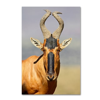 Robert Harding Picture Library 'Animals 3' Canvas Art