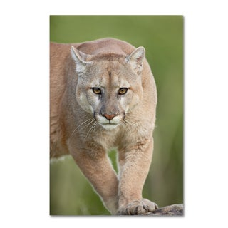 Robert Harding Picture Library 'Cougar' Canvas Art