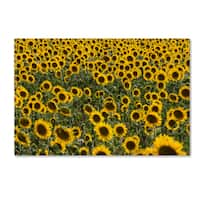 Robert Harding Picture Library 'Sunflower Scene' Canvas Art