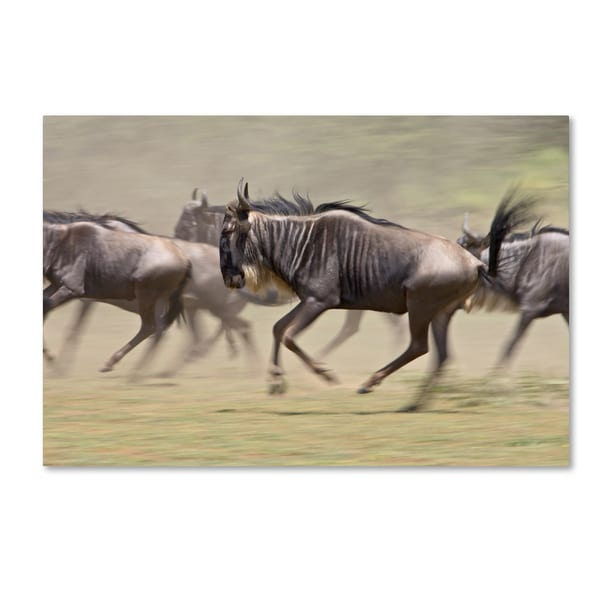 Robert Harding Picture Library 'Animals Running' Canvas Art