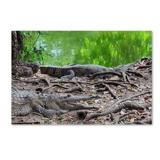 Robert Harding Picture Library 'Alligators' Canvas Art