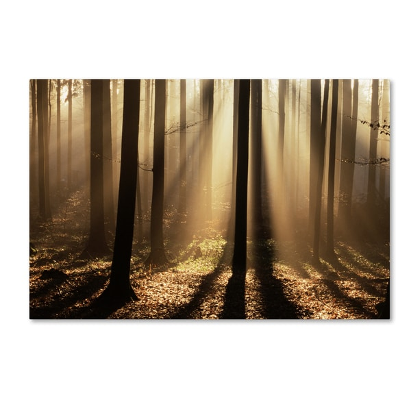 Robert Harding Picture Library 'Dark Forest' Canvas Art