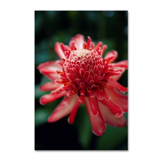 Robert Harding Picture Library 'Red Flowers' Canvas Art