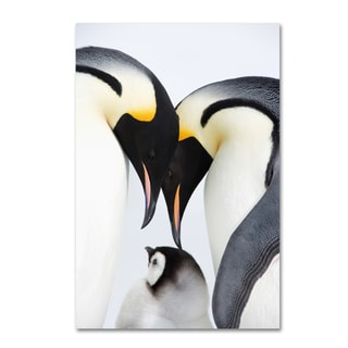 Robert Harding Picture Library 'Baby Penguin' Canvas Art