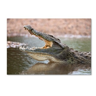 Robert Harding Picture Library 'Alligator' Canvas Art