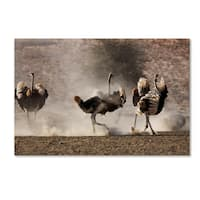 Robert Harding Picture Library 'Ostrich' Canvas Art