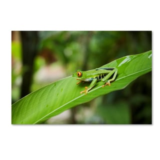 Robert Harding Picture Library 'Green Frog' Canvas Art