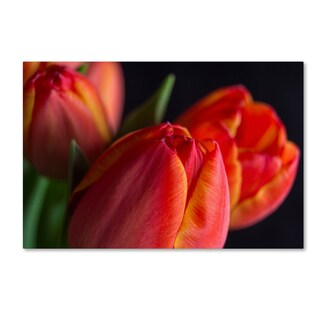 Bob Rouse 'Spring Tulips Ii' Canvas Art