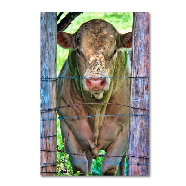 Bob Rouse 'face to face' Canvas Art