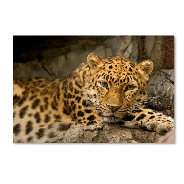 Denver Zoo Free Days: Shop Mike Jones Photo 'Denver Zoo Snow Leopard ' Canvas