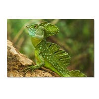 Robert Harding Picture Library 'Lizards 1' Canvas Art