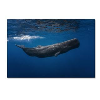 Barathieu Gabriel 'Sperm Whale' Canvas Art