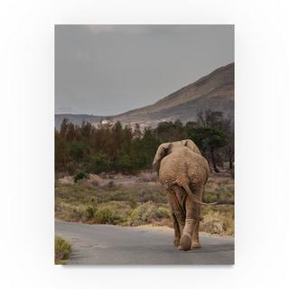 Thom Sivo 'Elephant on the Road' Canvas Art