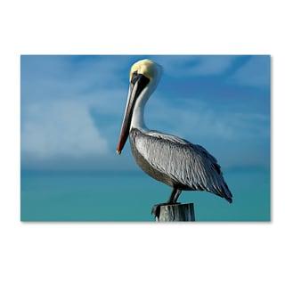 Mike Jones Photo 'Pelican' Canvas Art
