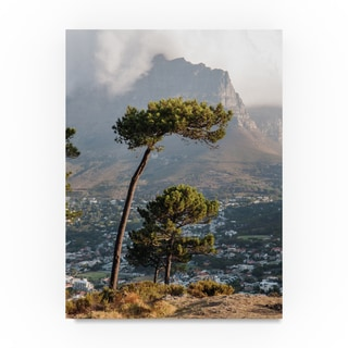 Thom Sivo 'Trees Over Capetown' Canvas Art