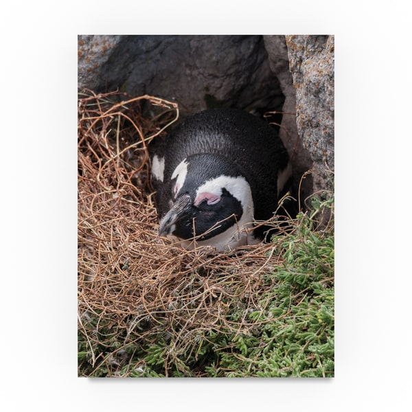 Thom Sivo 'Nap Time Penguin Style' Canvas Art