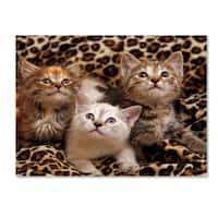 Mike Jones Photo 'Kittens 3' Canvas Art