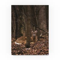 Thom Sivo 'Sitting Deer/Lake Isaac' Canvas Art