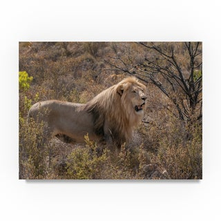 Thom Sivo 'The King of Beasts' Canvas Art