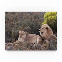 Thom Sivo 'Lion Couple' Canvas Art