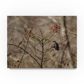 Thom Sivo 'American Robin with Berries' Canvas Art