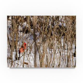 Thom Sivo 'Cardinal in the Brush' Canvas Art