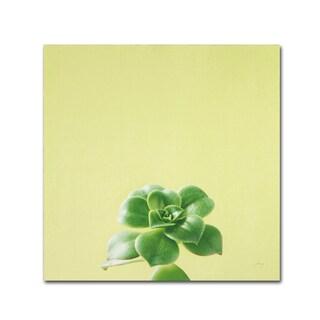 Felicity Bradley 'Succulent Simplicity VII' Canvas Art