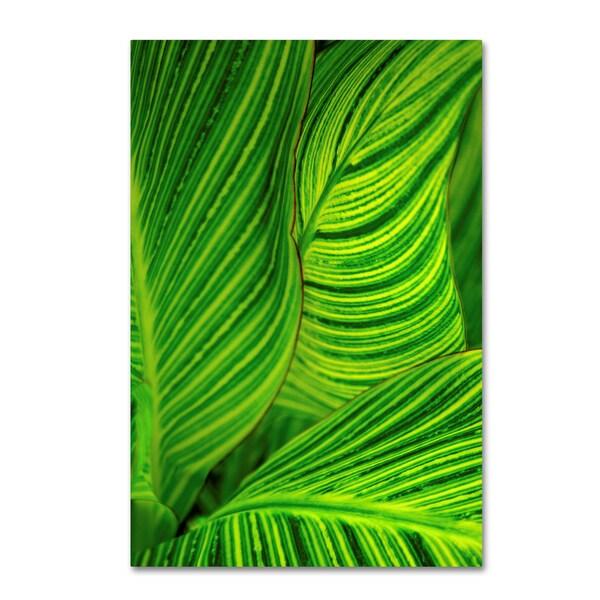 Geoffrey Baris 'So Green Striped' Canvas Art