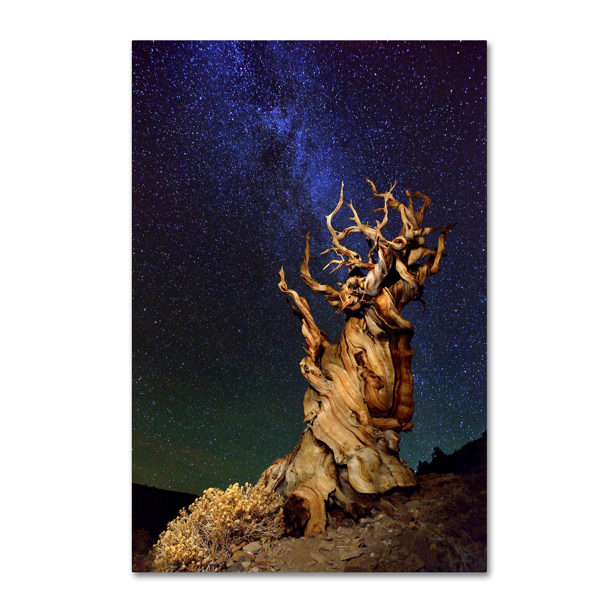 Tanja Ghirardini 'Bristlecone Pine' Canvas Art (16x24)