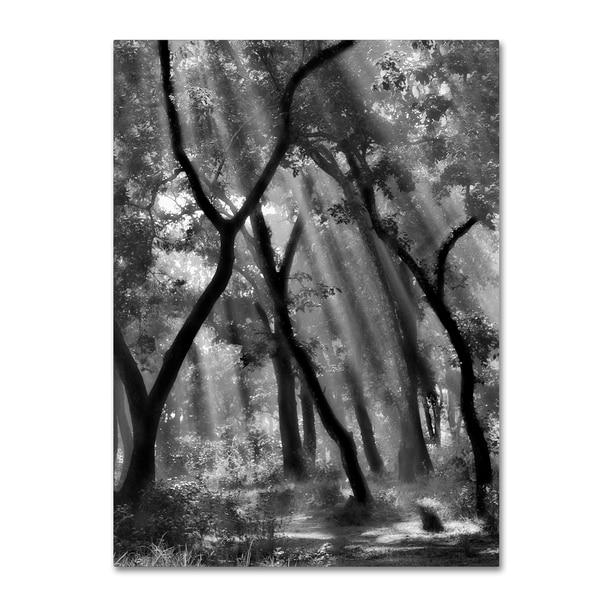Yvette Depaepe 'Enchanted Forest ' Canvas Art