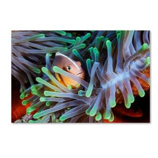 Barathieu Gabriel 'Clownfish' Canvas Art